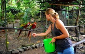 Costa Rica Wildlife Projekt